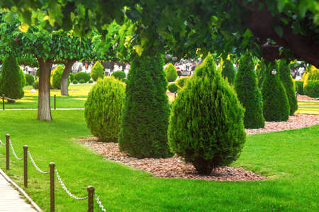 Landscaping of a backyard garden with tree branches and evergreen thuja mulched by yellow stone in a spring park with green lawn, on background decorative landscape design nobody.