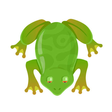 green frog with red eyes on a white background. character vector illustration. view from above Ilustrace