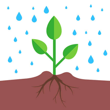 a plant with a root system pours rain. flat vector illustration.