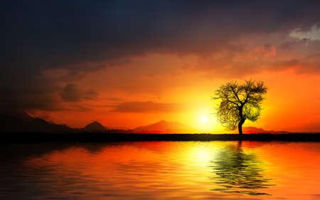 Tree at sunset on the lake