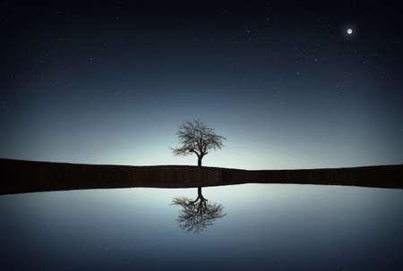 Reflection tree Foto de archivo