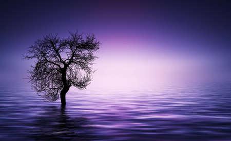 magentas: Magentas, purple tree background Stock Photo