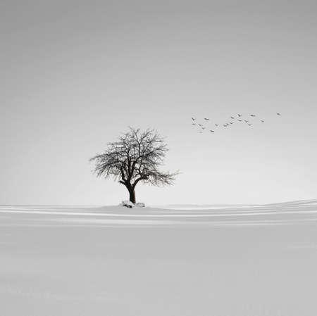 Winter Foto de archivo
