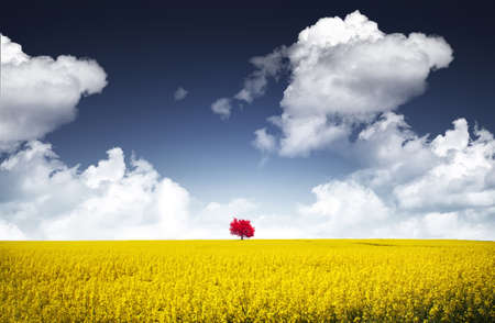 canola: Red and yellow
