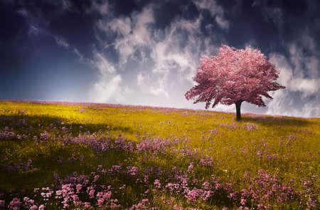 Pink tree Foto de archivo