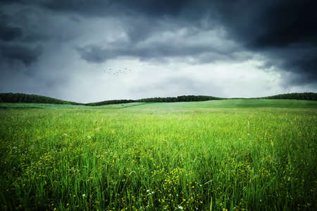 Meadow Foto de archivo