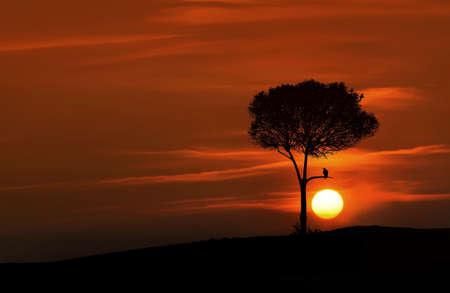 Sunset tree, animal