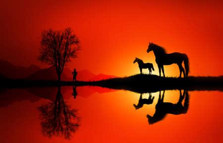Horse Foto de archivo