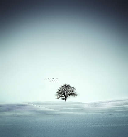 Winter tree Foto de archivo