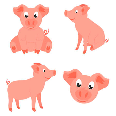 Colorful cartoon happy pig set. 2019 year chinese symbol. Farm animal vector illustration for icon, sticker sign, patch, certificate badge, gift card, stamp, label, poster, web banner