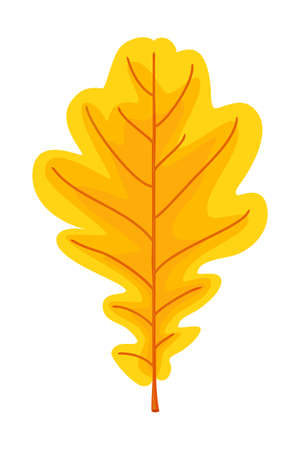 Cartoon yellow oak leaf. Autumn colorful foliage decor. Fall themed vector illustration for icon, logo, poster, postcard or invitation card decoration