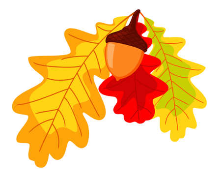 Colorful autumn oak leaves and acorn. Thanksgiving foliage decor. Fall themed vector illustration for icon,  poster, postcard or invitation card decoration 向量圖像