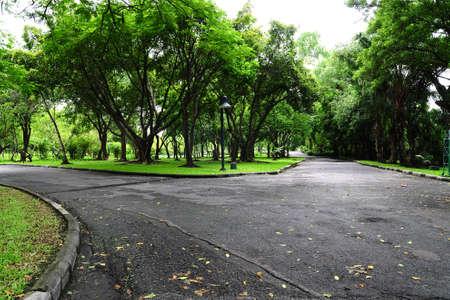 empedrado: La intersecci�n de dos calles tranquilas peque�as o caminos en el jard�n