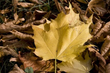 autumn scene with leaves photo
