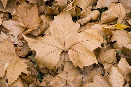 Autumn scene with leaves Standard-Bild