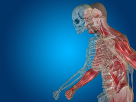 transparent male anatomy: Conceptual Anatomy human body on blue background