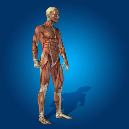 Conceptual 3D human man health anatomy on blue background