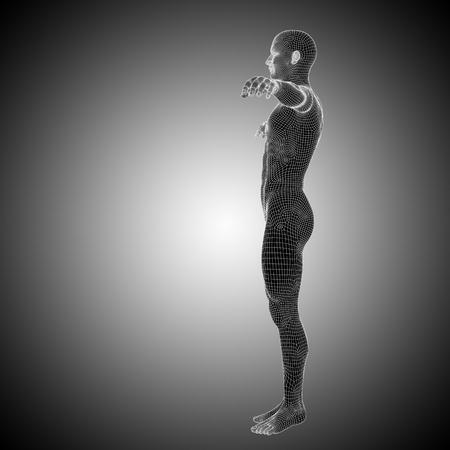 Conceptual wireframe human or man anatomy body