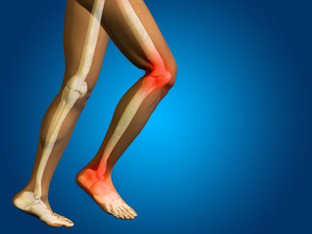 shin bone: Conceptual human body anatomy articular pain on blue background