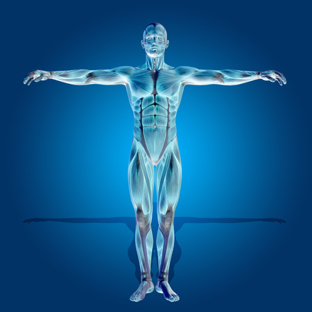 anatomy nude: Conceptual 3D human man health anatomy on blue background