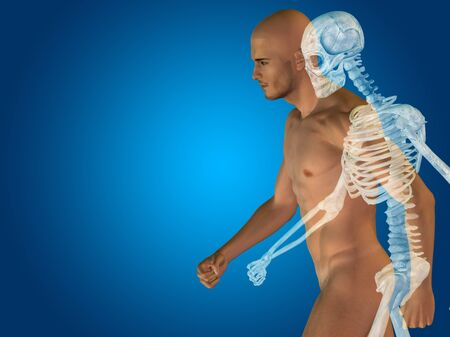muscle anatomy: Conceptual Anatomy human body on blue background