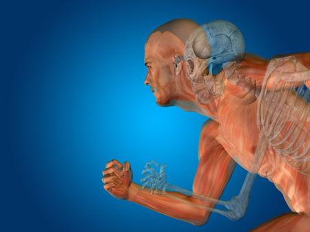 青の背景に人体解剖学概念
