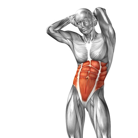 Conceptual 3D chest anatomy muscle isolated on white background Stock Photo