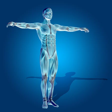 nude male body: Conceptual 3D human man health anatomy on blue background