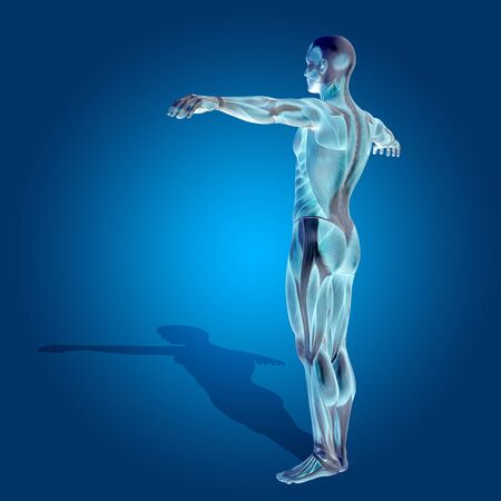 naked male: Conceptual 3D human man health anatomy on blue background