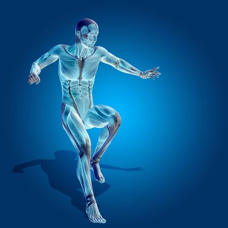 anatomically: Conceptual 3D human man health anatomy on blue background