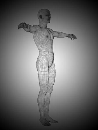 anatomically: Conceptual wireframe human or man anatomy body