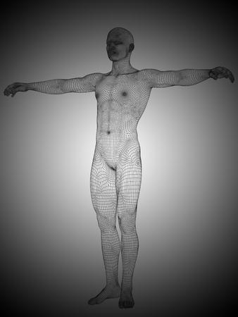 anatomic: Conceptual wireframe human or man anatomy body