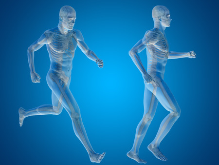 collection of people: Conceptual man or human 3D anatomy or body on blue background