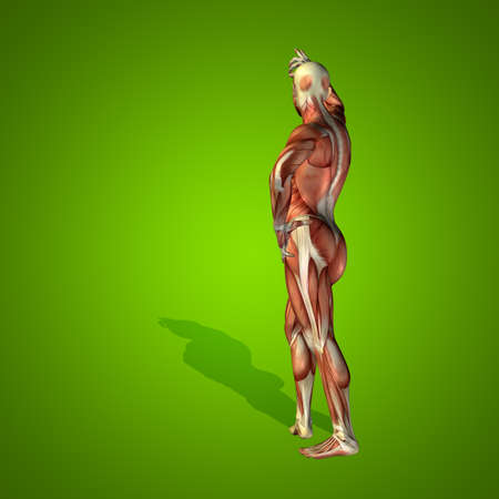 nude male body: Conceptual 3D human man health anatomy on green background Stock Photo