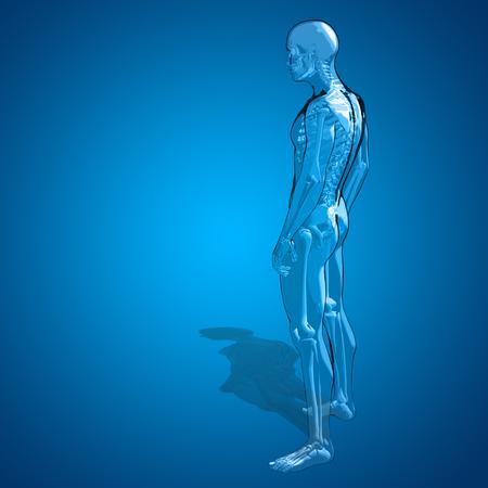 personas de espalda: Hombre humano conceptual 3D o masculina cuerpo transparente anatom�a esqueleto sobre fondo azul degradado Foto de archivo