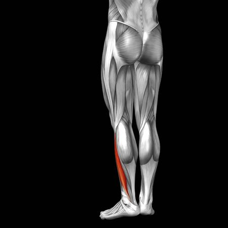 didactic: Conceptual 3D human front lower leg muscle anatomy isolated on black background Stock Photo