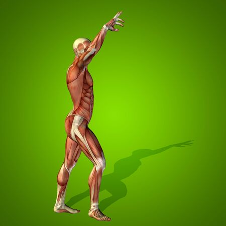 naked male body: Conceptual 3D human man health anatomy on green background Stock Photo