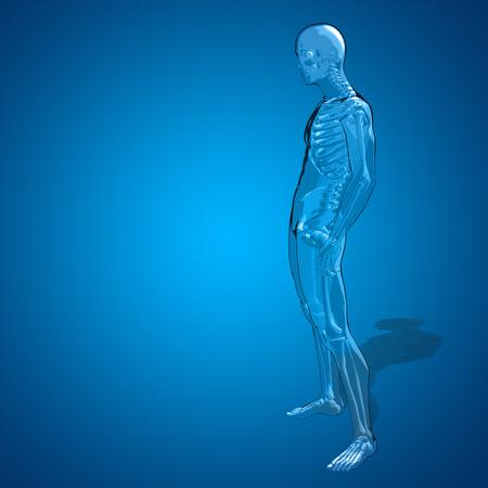 Conceptual 3D Human Man Or Male Skeleton Anatomy Transparent.. Stock ...