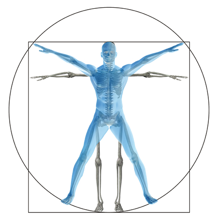 torso: Vitruvian human or man as a concept or conceptual 3d proportion anatomy body isolated on background