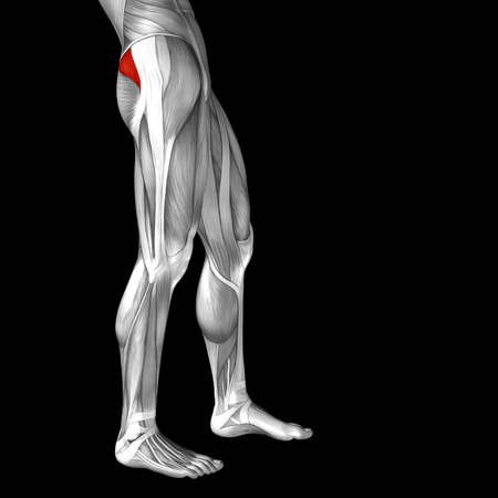 achilles tendon: Conceptual 3D human front upper leg muscle anatomy isolated on black background