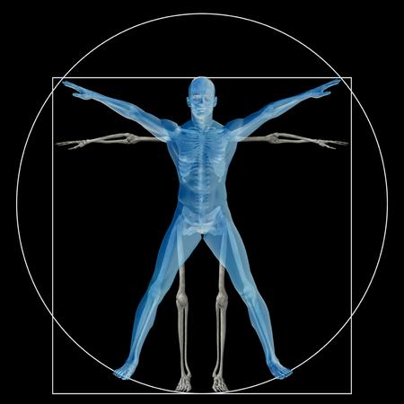 BIOLOGIA: Humana o el hombre de Vitruvio como un concepto o conceptual anatomía carrocería proporción 3d aislado en el fondo