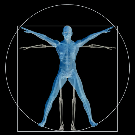 biology: Vitruvian human or man as a concept or conceptual 3d proportion anatomy body isolated on background