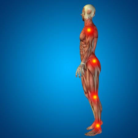 anatomia: Conceptual cuerpo dolor en las articulaciones hombre anatomía humana en 3D sobre fondo azul