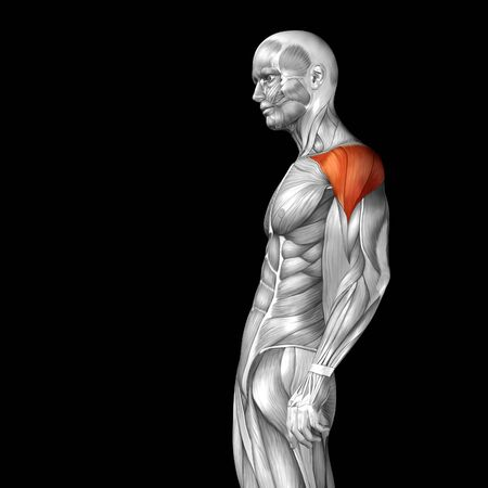 anatomy nude: Conceptual 3D chest anatomy muscle isolated on black background