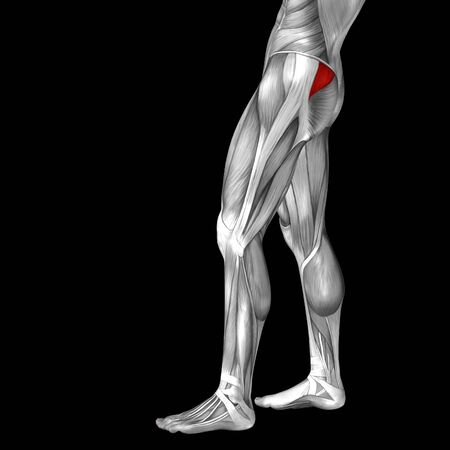 muscular anatomy: Conceptual 3D human front upper leg muscle anatomy isolated on black background