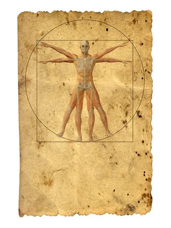 skeleton man: Konzept oder konzeptionelle vitruvian menschlichen Körper Zeichnung auf altem Papier Hintergrund Lizenzfreie Bilder