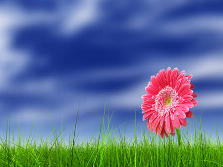 field of daisies: Conceptual spring pink flower in green grass background Stock Photo