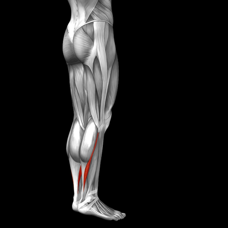 achilles tendon: Conceptual 3D human front lower leg muscle anatomy isolated on black background Stock Photo