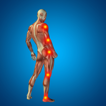 muscle anatomy: Conceptual 3D human man anatomy joint pain body on blue background Stock Photo