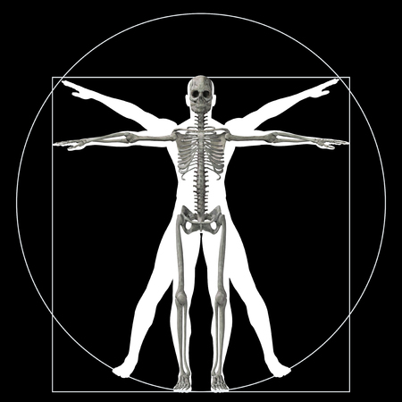 medical man: Vitruvian human or man as a concept or conceptual 3d proportion anatomy body isolated on background